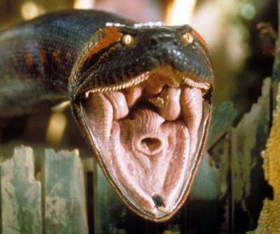 Anacondas Mouth 96